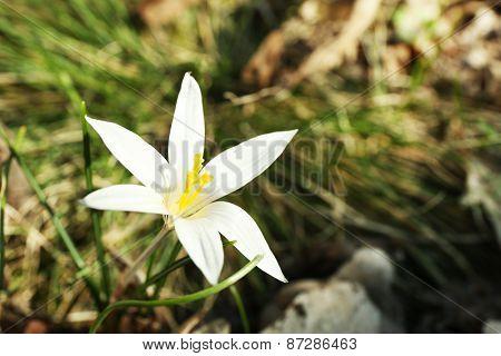 White flower, outdoors, closeup