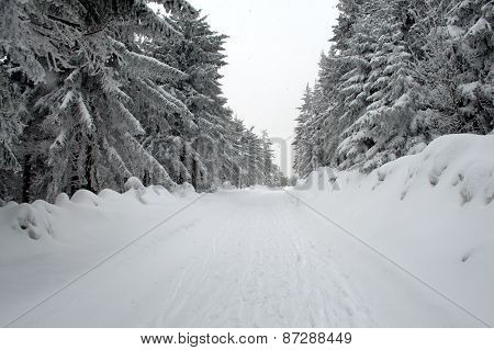 Snowy Path Between Trees