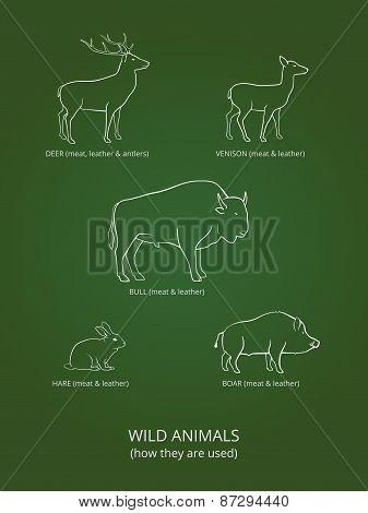 Wild Live Animals Poster
