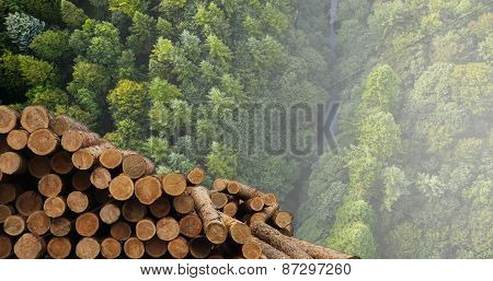 Industry for the processing and sale of wood.