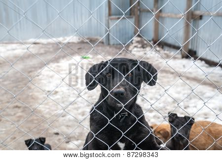 Black Dog And Puppies Are Behind Metal Grid In Shelter