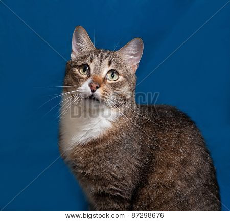 Tabby And White Cat On Blue