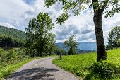 picture of french curves  - Curving backroad with a tree on a sunny day in the Pyrenees - JPG