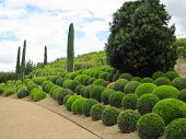 pic of garden-art  - The true landscape designers and gardeners  will see the true value of this topiary sample - JPG
