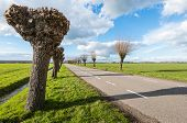 stock photo of prunes  - Pruned and not pruned willows along the side of a Dutch country road on a sunny day early in the spring season - JPG