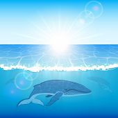 stock photo of whale-tail  - Blue whales swims in the ocean - JPG