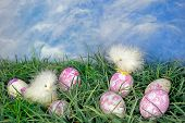 pic of baby easter  - Dyed Easter eggs in green grass with baby chicks.