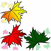stock photo of canada maple leaf  - Maple leaves on a white background - JPG