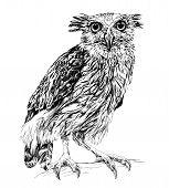 stock photo of screech-owl  - Sketch of owl - JPG