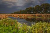 stock photo of marshes  - Landscape with marsh overgrown sedge - JPG