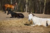 picture of foal  - White foal on the meadow at spring time - JPG