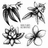 pic of tropical plants  - Vector set of ink hand drawn exotic plants and flowers isolated on white background - JPG
