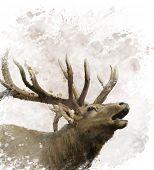 picture of bull head  - Digital Painting Of Bull Elk - JPG