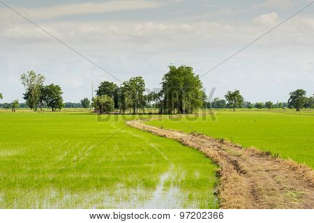 Long road to field rice ,Thailand.