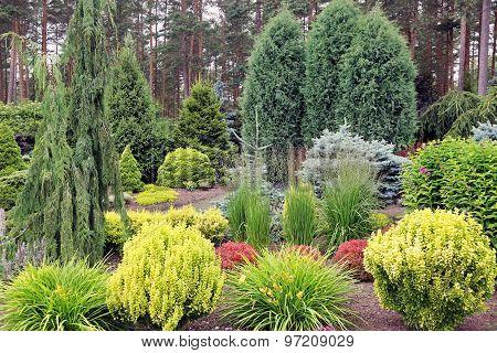 Design Garden Landscape With Mix Of Plants