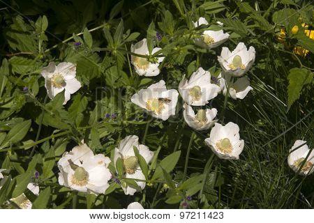 Flowers, Bee