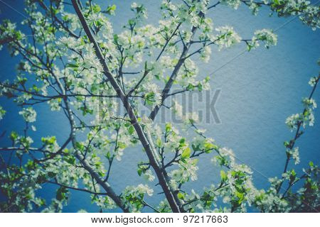 Retro Spring Blooming Trees