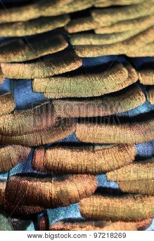 Meleagris Ocellata Feathers