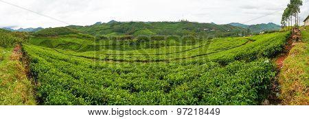 Tea plantations panorama munnar india