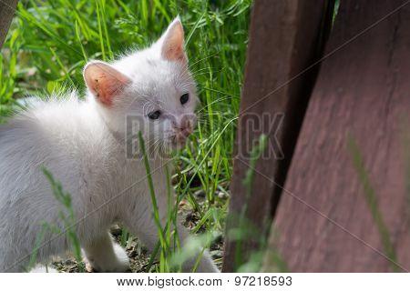 White Kitten In The Garden