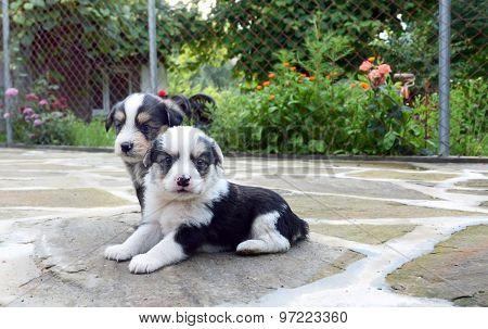 Cute Little Dogs