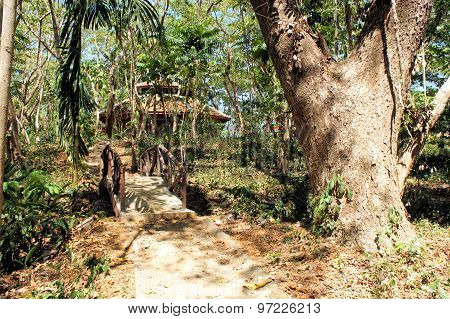 Great Narra tree and vegetation. Philippines. Tropics.