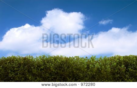 Hedge And Sky