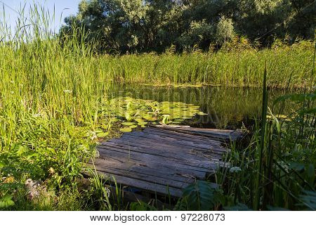 Summer Landscape On  Forest Lake With Water Lilies , Reeds And Wooden Bridge.