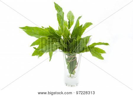 Small Bunch Of Mint, Isolated