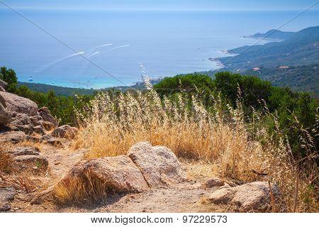 South Corsica, Coastal Landscape With Dry Grass