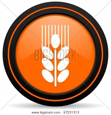 grain orange icon agriculture sign