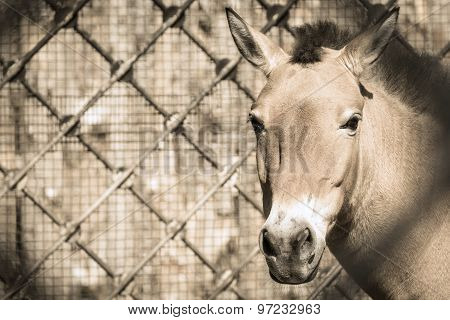 Front Muzzle Of A Horse Beige Color In Full-face