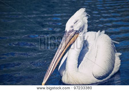 Pelican Sideways On An Empty Water Surface