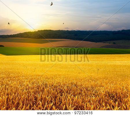 Art Summer Field, Sunrise And Blue Sky