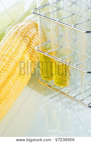 Biofuel Or Corn Syrup Sweetcorn