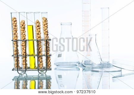 Soybean Genetically Modified, Plant Cell