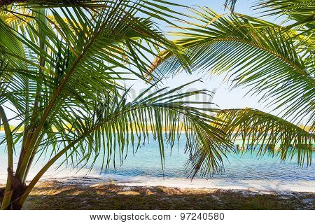 Natural Background With Palm Tree Leaves And Sun Reflection. Cuba, Caribbean Sea.