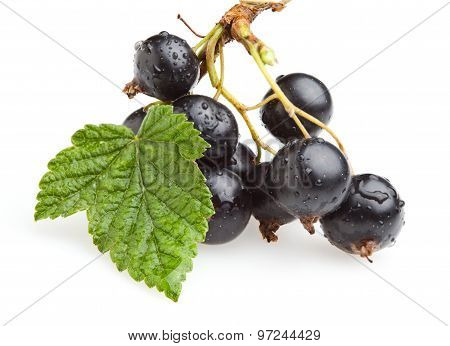 Bunch Of Black Currant Berries