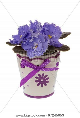African violet (saintpolia) in the decorative pot isolated.