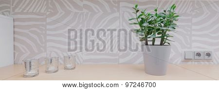 Plant On The Tabletop
