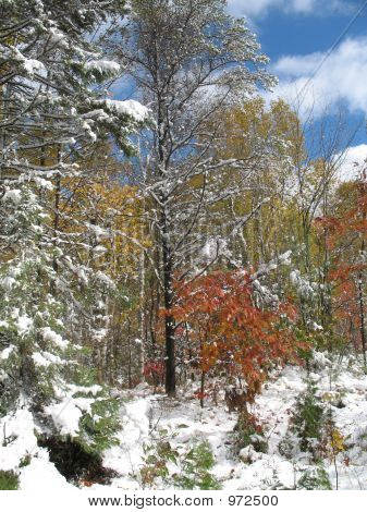 Snow In Autumn