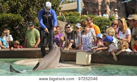 A Dolphin Entertains Visitors At Dolphin Point