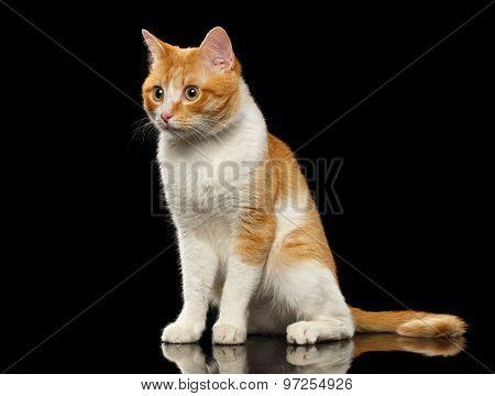 Surprised Ginger Cat Sits On Black Mirror