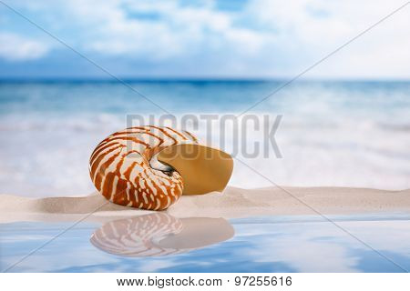 nautilus shell on white sand with reflection under the sun light, shallow dof