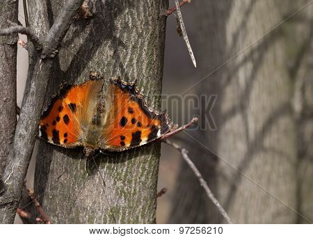 Butterfly On Tree Trunk In Forest