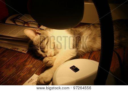 Spyashy Cat Under The Reading Lamp