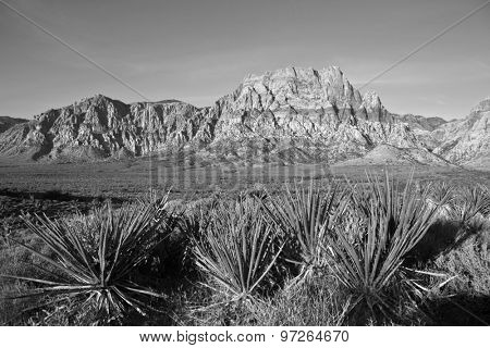 Red Rock Nevada sandstone and Yuccas in black and white.