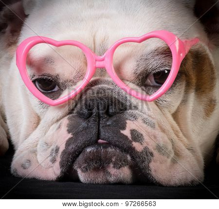 lovely dog - bulldog wearing heart shaped glasses
