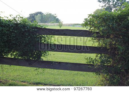 Plants growing on fence in country