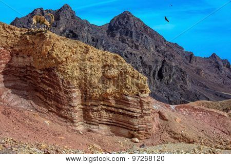 Multi-colored mountains of Eilat, Israel. Warm January day. Black basalt mountain of King Solomon